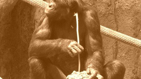 bonobofishing042-sepia