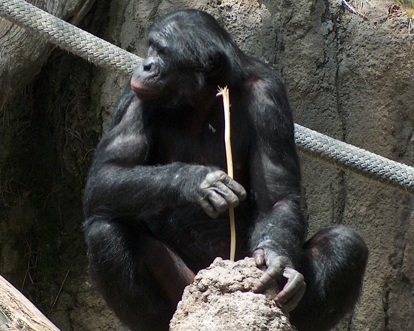 bonobofishing042